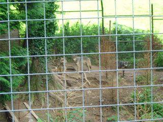 the famous wolf enclosure, allegedly an important part in the protection of the species